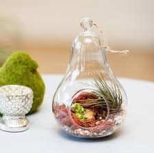 Decorating: Beautiful Glass Globe Hanging Terrarium With Air Plants  Featuring Hanging Rope On Wooden Outdoor