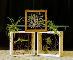 How To Do String Art String Art With Air Plants Bedners Farm And Greenhouse