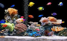 Cool Aquariums Creative Aquarium Backgrounds The Best Aquarium