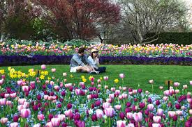 expand spring has sprung courtesy dallas arboretum