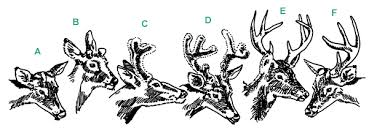Landowners Guide White Tailed Deer