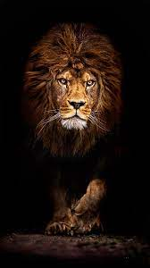 Cool Lion Wallpapers For Iphone - Ultra ...
