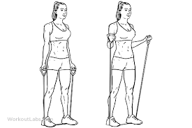 Biceps Exercise Chart Resistance Band Bicep Curls Workoutlabs Exercise Guide