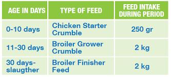 Broiler Chicken Feeding Schedule
