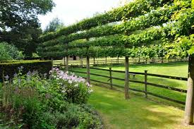 Small Picture Espalier Trees for Every Garden Garden Design