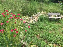 Basic Permaculture Design Full 72 Hour Permaculture Design Certificate Pdc Course