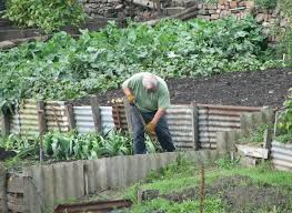 vegetable gardening the complete
