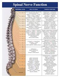 Vertebral Subluxation Chart What Is A Vertebral Subluxation And How Can It Cause