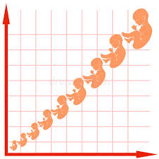 Child Growth Chart Chart Child Growth Stock Illustrations 612 Chart Child