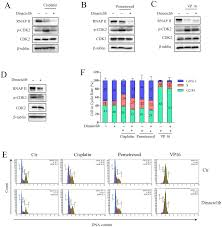 Accumulated Cytotoxicity Of Cdk Inhibitor Dinaciclib With