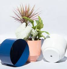 Stylish Oversized Planters and Where to Find Them