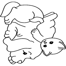 Baby Puppy Com Wiring Diagram Database
