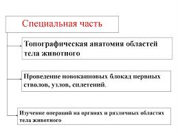 Курсовик по хирургии резекция прямой кишки Учеба Шпаргалки  Курсовая по хирургии