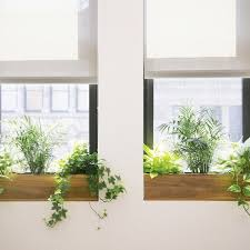 office planter. how to choose the best office plant for your work space planter a