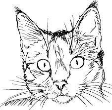 Disegni Di Gatti Stilizzati Secun