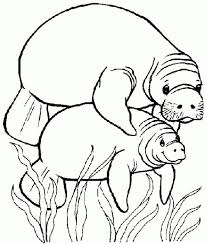 manatee coloring page 2. Plain Page Best Www Shaqodoon Com Images On Free Pages  Manatee Clipart Coloring Page For Coloring Page 2 Y
