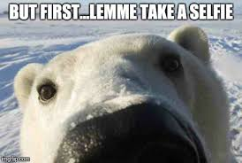 Polar Bear selfie - Imgflip via Relatably.com