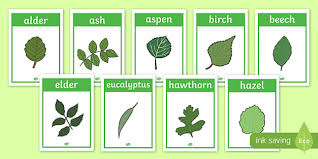 Tree Leaf Identification Chart Free Tree Leaf Identification Display Posters Woodland