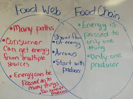 Producer And Consumer Venn Diagram Fifth Grade Lesson Food Web Game Betterlesson