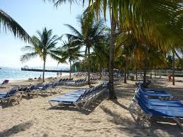 Hotel Riu Ocho Rios: Lounge chairs and Coconut Palm Trees & Lounge chairs and Coconut Palm Trees - Picture of Hotel Riu Ocho ... Cheerinfomania.Com