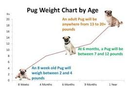 Pug Dog Growth Chart Pug Weight Puppy Growth Chart Pugs