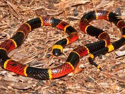 Snake bites: Symptoms, treatment, and <b>types</b> of snake