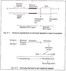 essay on hormones characteristics and mechanism hormones that bind to cell membrane receptor