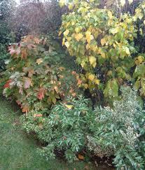 Image result for giardino autunnale dino campana