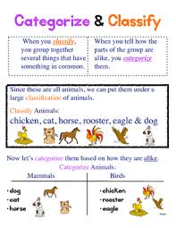 Categorize Classify Anchor Chart