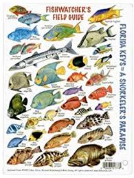Amazon Com Paper Pocket Guide Book Coral Fishes