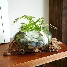 driftwood glass bowl driftwood and blown glass bowl uk