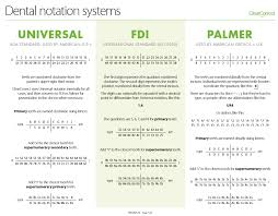 Dental Numbering Chart Dental Notation Systems Clearcorrect Support