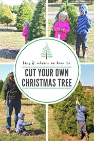 10 tips on how to choose cut down your own christmas tree