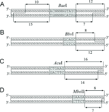 Restriction Enzyme Biomolecular Computers With Multiple Restriction Enzymes
