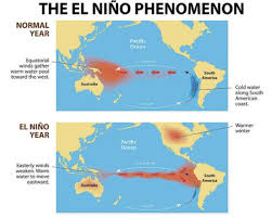 what causes el nino. the trade winds push warm water on surface of ocean from east to west (westerly). this causes what el nino