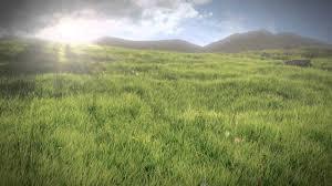 grass field. Grass Field L