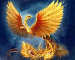 фото птицы феникса