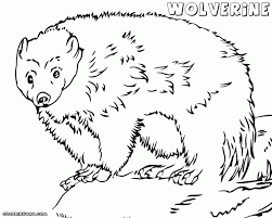 Small Picture Coloring Download Wolverine Animal Coloring Pages Wolverine