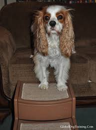 How Safe Is It for Your Dog to Jump off Furniture