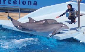 Trainer gives blowjob to dolphin
