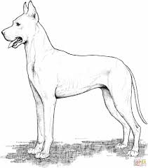 Small Picture Dog Coloring Page Free Printable Pages Excellent Dogs And Cats At
