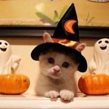 cute kittens in halloween costumes. Perfect Halloween Halloween Short Movie Cutest Cats And Dogs Pigs Enjoy Halloween Party I  Like Pumpkin Pots Ghost Ornaments Orange Color Which Do You  For Cute Kittens In Halloween Costumes Pinterest
