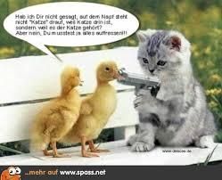 Lustige Bilder Tiere Mit Spruchen Parkinggarageml