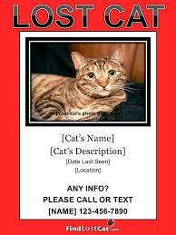 Lost Pet Flyer Maker Lost Cat Flyer Poster Templates Free Downloads 52