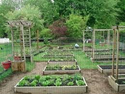 Small Picture Backyard Organic Gardening Ideas How My Dad Transformed My Moms