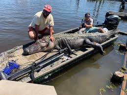 Hunters Nab Giant Minutes After Ms Alligator Season Opens