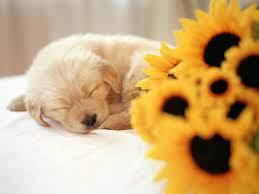 Puppy wallpaper, Cute puppies, Puppy ...