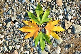 Free photo Background Beautiful Season Outdoor Autumn Nature Max Pixel