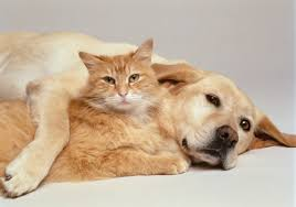 cat and dog 3