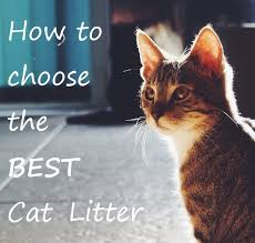 Cat Litter Comparison Chart How To Choose The Best Cat Litter Comparison Review 2019